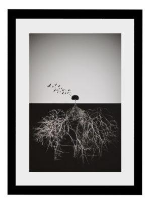 Plakat Drzewo