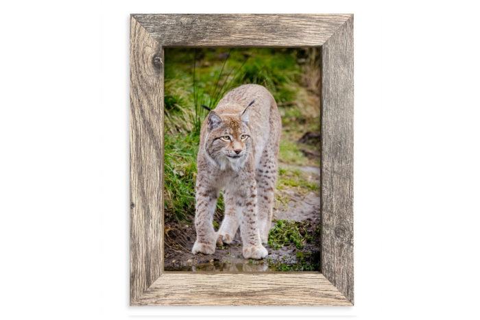 Fotoramka ramka na zdjęcie Pandora rysie szare drewno